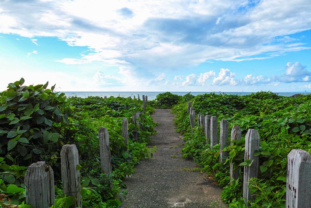 空と海の青さと植物の緑