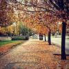 Colores de #otoño #amarillos #dorado ambiente cálido el de esta tarde #igersmadrid #madrid #megustamadrid #iphone #instagood