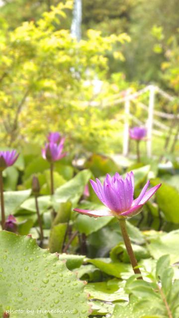 池にはキレイなお花が!