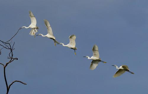 Egret composite