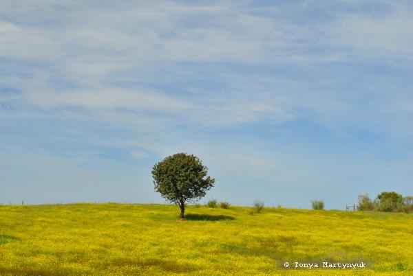 4 - отели в Каштелу Бранку - ферма ремесленников