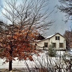 After the first #snowfall ! #house #trees #snow #fall #winter @eduardontavares #woodstockontario #fallcolors