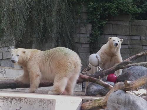 Anori und Luka, Zoo Wuppertal, 27.9. 2014