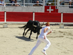 western riding(0.0), jumping(0.0), tradition(0.0), performing arts(0.0), matador(0.0), animal sports(1.0), cattle-like mammal(1.0), bull(1.0), event(1.0), sports(1.0), bullring(1.0), entertainment(1.0), performance(1.0), bullfighting(1.0),