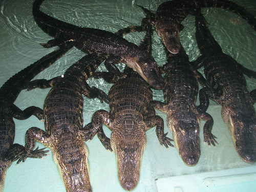 Insta-Gator Ranch