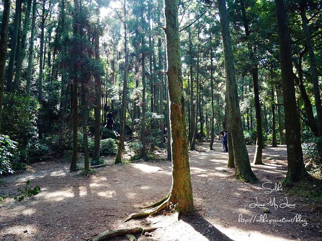陽明山免費婚紗景點黑森林