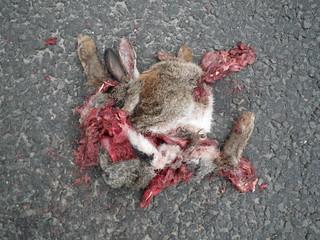 double rabbit!