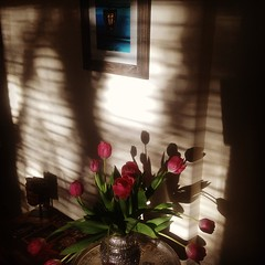 A magical evening watching the play of shadow and light#tulips #spring #photographs #lanterns#wanderlust #mexico#myphotographs