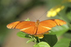 Schmetterlinge und Insekten