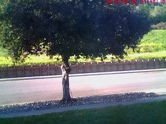 Record by Motion Detection E-mail[Image], 2015-03-06 07:40:11