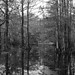 Cypress lake, B&W by Monceau
