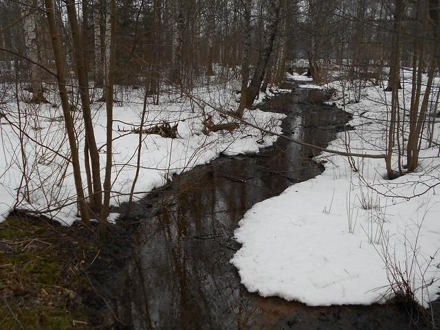 Poikkeuksellisen aikaisen lumensulamisen tilanteita Hämeenlinnassa 28.2.2015: lehtipuumetsikön oja