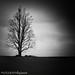PARKWAY TREE