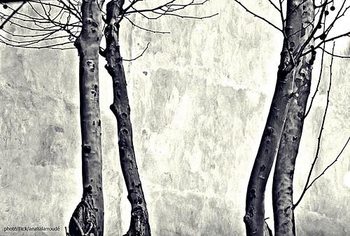 Autor: Aprehendiz-Ana Lía