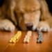 Good Dog by bztraining