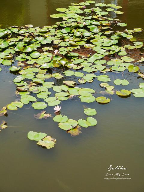台北一日遊景點推薦植物園荷花蓮花池 (41)