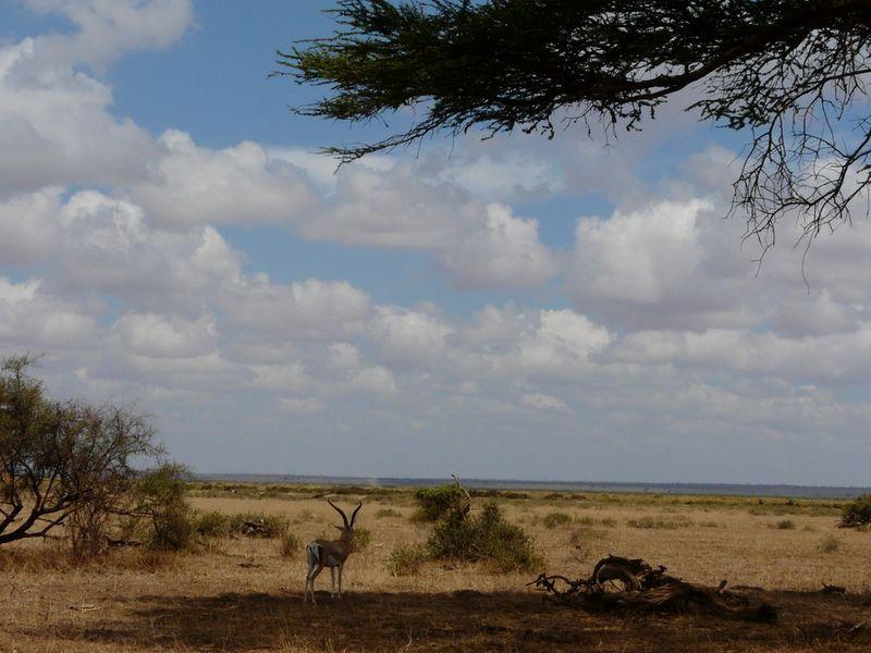 Kenia2007-0646