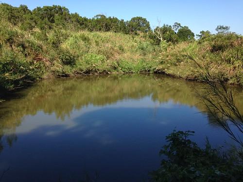 石虎田旁潔淨無汙染的池塘。