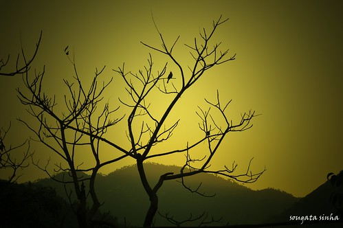 sunset india mountain color tree bird nature evening hill mandi hilltop himachalpradesh treeart kamand