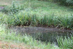 fen, wetland, swamp, prairie, grass, plant, natural environment, grassland, pond, marsh,