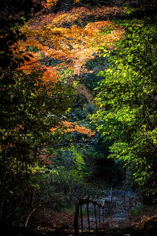 秋を見下ろして