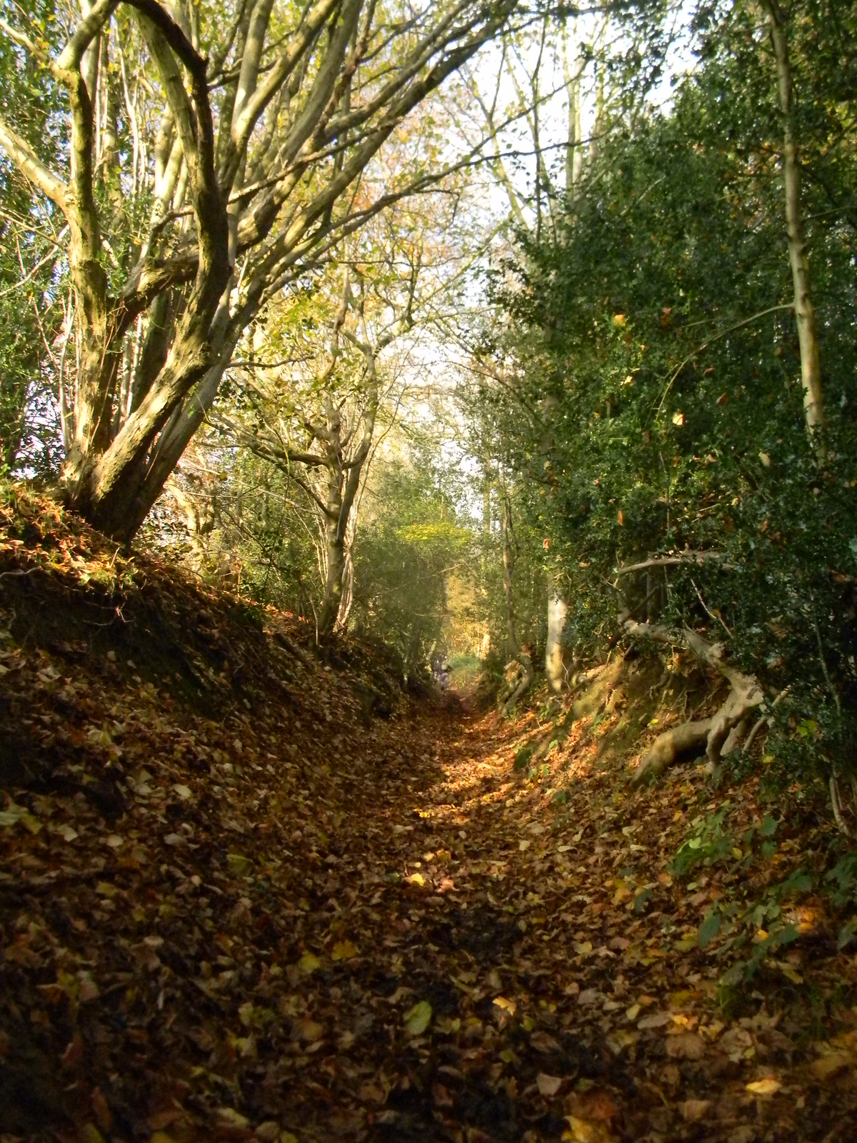 Up the bridleway 3 Leigh to Sevenoaks Muddy tortuous steep but at its picturesque best.