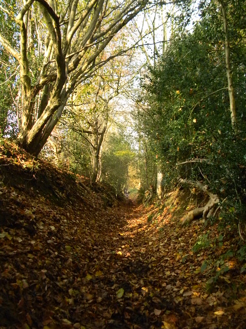 Up the bridleway 3