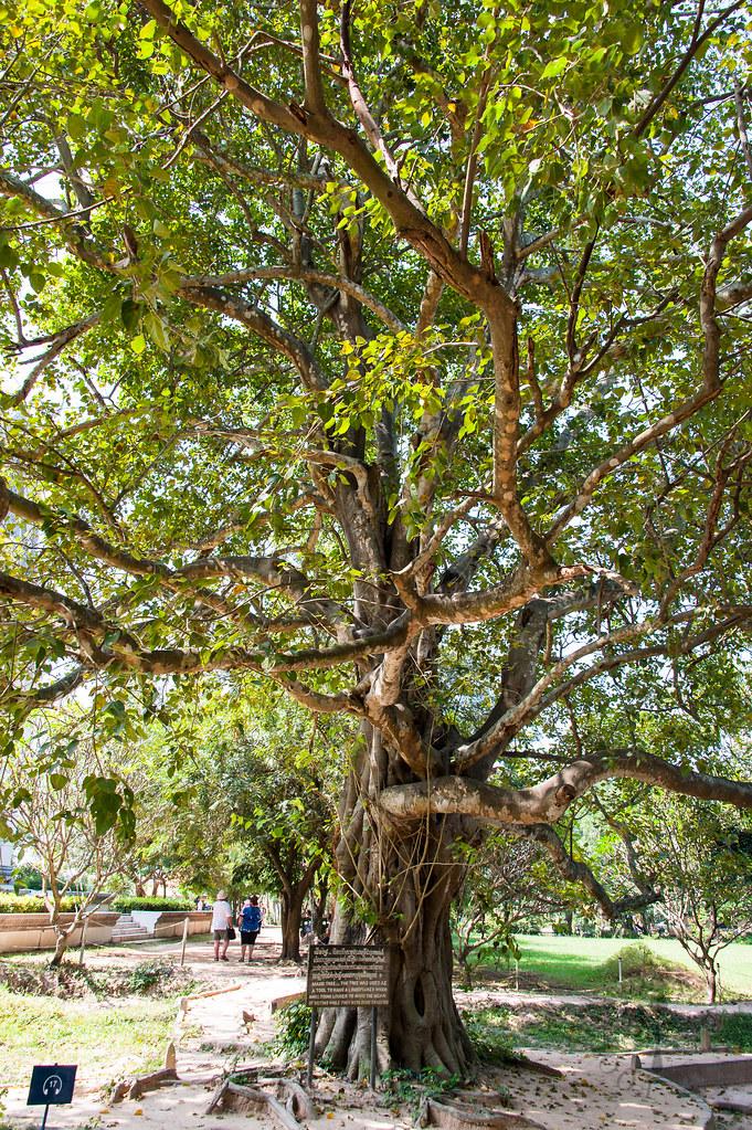 Radio tree