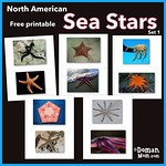 Free Sea Stars Flash Cards (set 1)