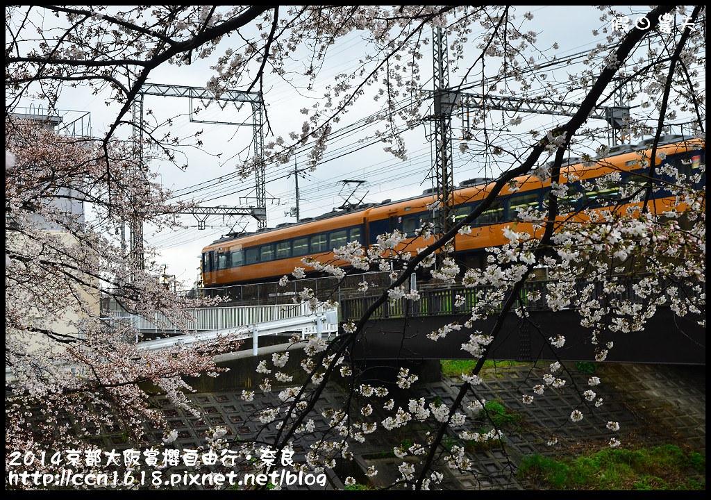 2014京都大阪賞櫻自由行.奈良DSC_0869