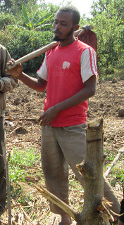 Kelifa: one of the farmers who apply tomato staking_Seka_Jimma (Photo:ILRI\(Gemeda Duguma)