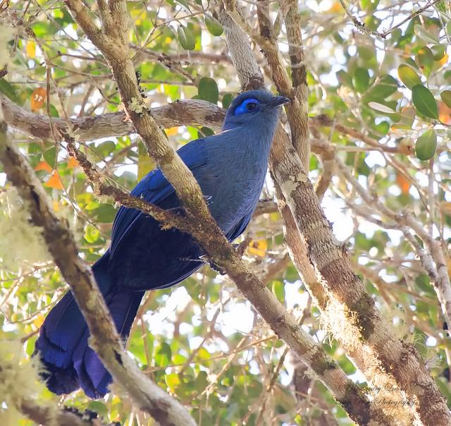 мадагаскарские птицы фото выполнять нужно того