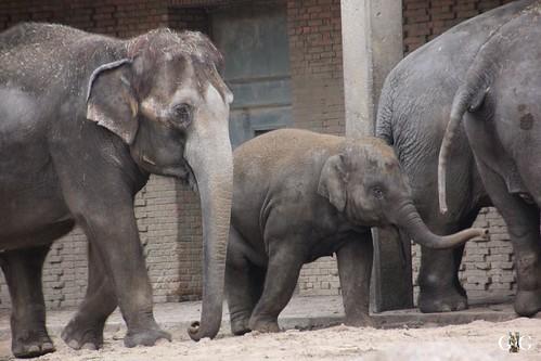 Sonntags Besuch im Zoo Berlin 25.01.2015 68