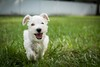 Winston Puppy