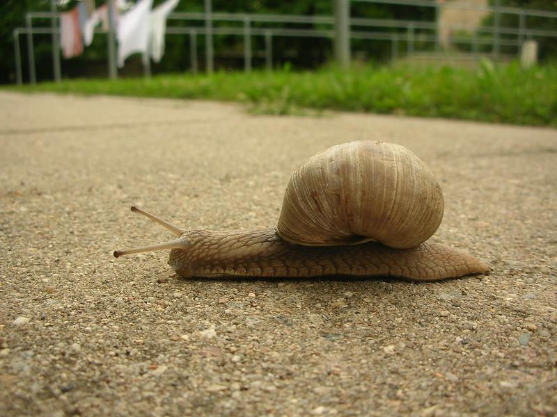 Schnecke - Snail