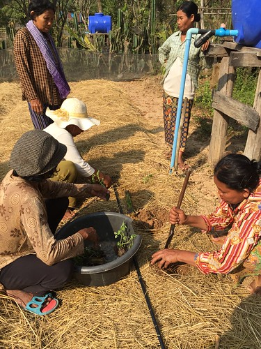 photo: women kneeling, one digging a hole in mulch and the other planting transplants in the soil
