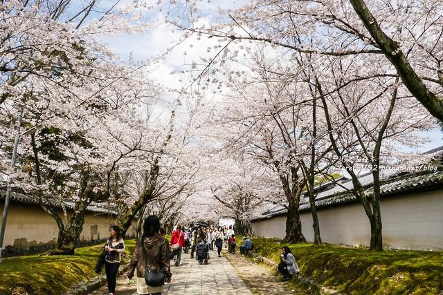 0402D8京都醍醐寺-1160529