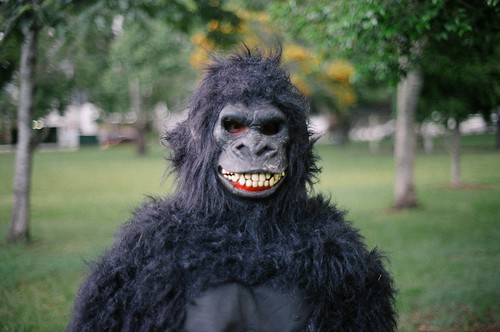 Gorilla's Day Out