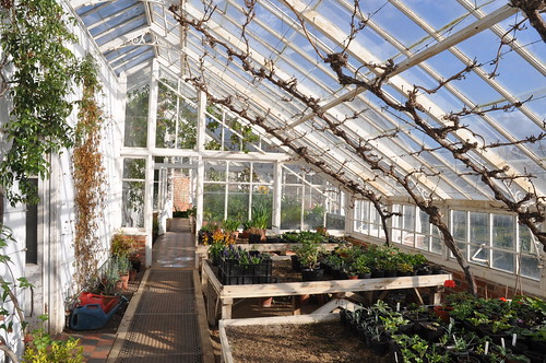 The traditional greenhouse at Raveningham Hall, Norfolk (8 photos in series)