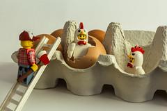 Eggscape_
