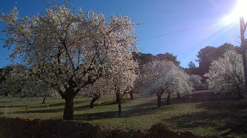 Primavera, o casi