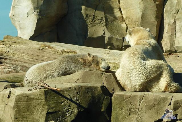 Zoo am Meer 08.03.2015  157