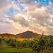 Rainbow Orchard by Gary Randall