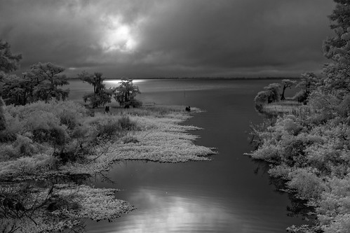 summer sky blackandwhite bw panorama usa cloud lake plant reflection tree reed water grass sunrise landscape ir dawn seasons unitedstates florida cloudy infrared cypress verobeach centralflorida bluecypresslake