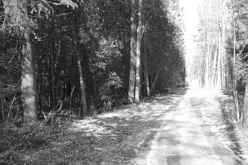 winter blackandwhite bw snow ontario canada forest woods december noiretblanc path hiver trail neige forêt bois décembre img6071 northsouthtrail southstormont protopotogsl