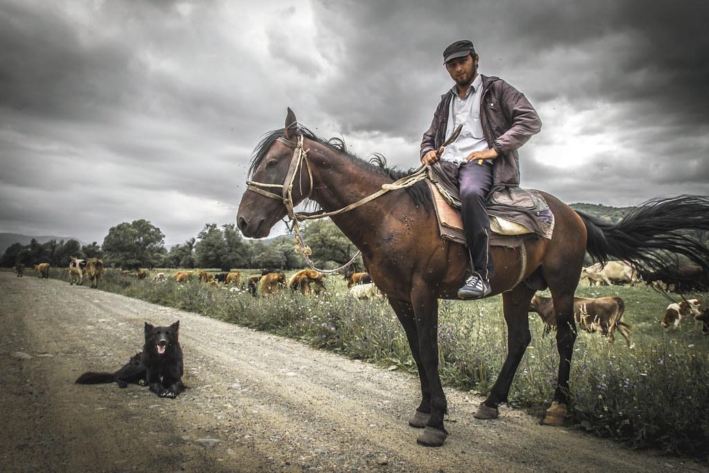 'Cowherder in Karachay'
