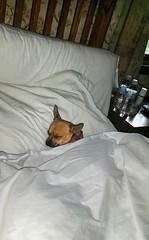Its My Day Off. Dont Disturb.