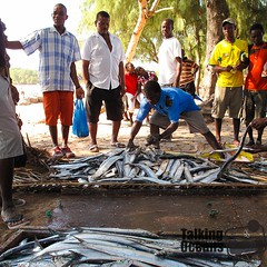 A fisher sorting and selling his catch on the beach in southern Mozambiques Praia do Tofo