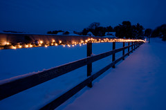 Twinkling Fence Friday