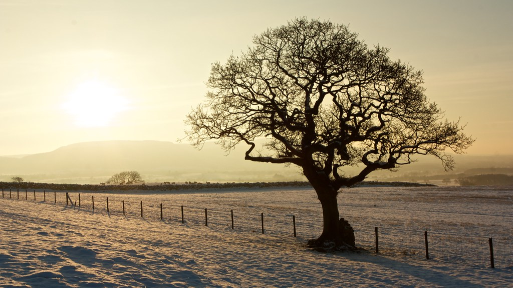 Winter Tree near Kildale
